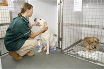 Nurse with labrador